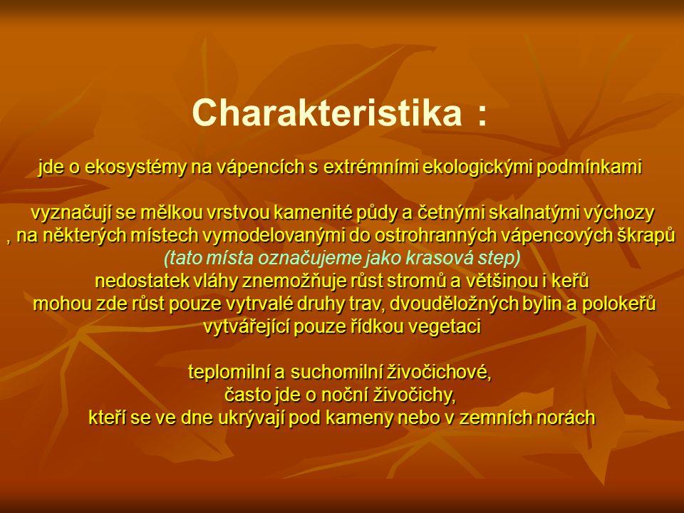 4 Významné druhy rostlin : pouze byliny : kavyl sličný (Stipa pulcherrima) §§ kavyl vláskovitý (Stipa capillata) kostřava sivá (Festuca pallens)kostřava sivá (Festuca pallens) lipnice bádenská (Poa badensis) strdivka brvitá (Melica ciliata) kosatec nízký (Iris pumila) §§ kosatec skalní písečný (Iris humilis arenaria) §§§kosatec skalní písečný (Iris humilis arenaria) §§§ huseník ouškatý (Arabis auriculata)huseník ouškatý (Arabis auriculata) rozrazil rozprostřený (Veronica prostrata) rozrazil časný (Veronica praecox) mochna písečná (Potentilla arenaria) rozchodník ostrý (Sedum acre) rozchodník bílý (Sedum album) netřeskovec výběžkatý (Jovibarba globifera) kriticky ohrožené (§§§) silně ohrožené (§§) ohrožené (§)