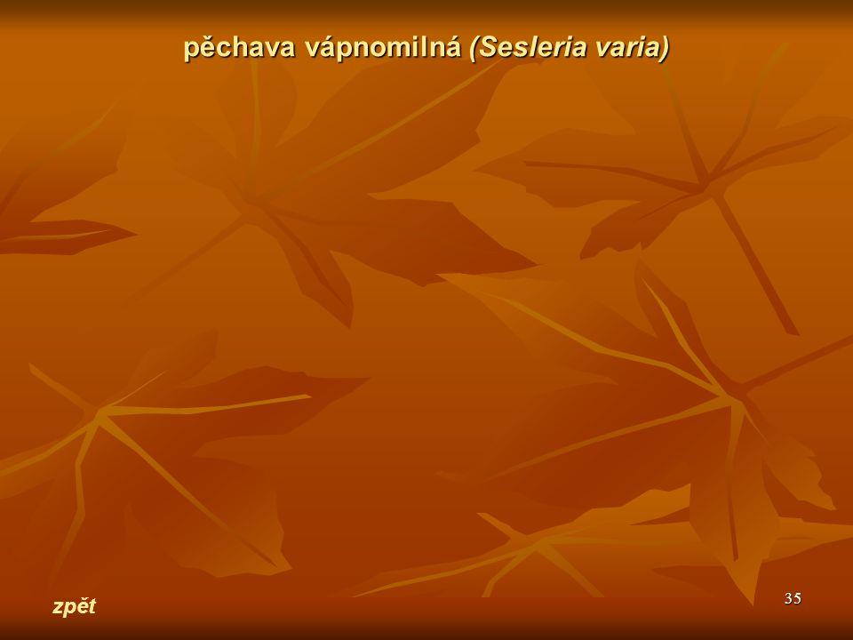 35 zpět pěchava vápnomilná(Sesleria varia) pěchava vápnomilná (Sesleria varia)