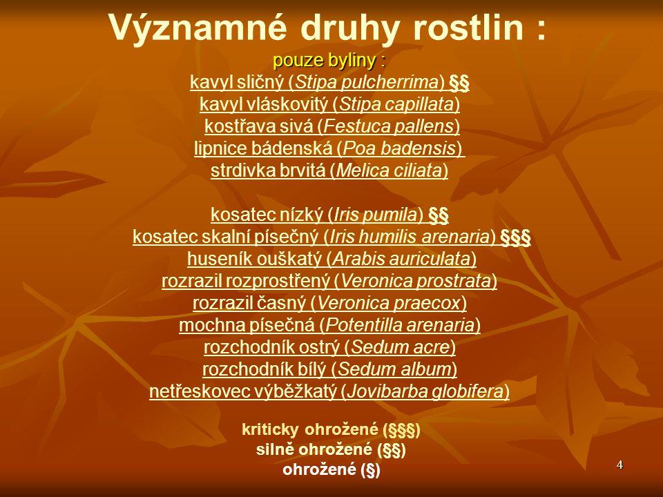 5 Významné druhy rostlin : pouze byliny : paprska velkokvětá (Orlaya grandiflora) boryt barvířský (Isatis tinctoria) večernice smutná (Hesperis tristis) divizna knotovkovitá (Verbascum lychnitis) divizna brunátná (Verbascum phoeniceum) § hvězdnice zlatovlásek (Aster linosyris) § hvězdnice chlumní (Aster amellus) § kozinec vičencovitý (Astragalus onobrychis) § kozinec rakouský (Astragalus austriacus) §§ chrpa chlumní (Centaurea triumfettii) § oman oko Kristivo (Inula oculus-christi) § mák bělokvětý (Papaver maculosum) violka skalní (Viola saxatilis) česnek žlutý (Allium flavum) kriticky ohrožené (§§§) silně ohrožené (§§) ohrožené (§)