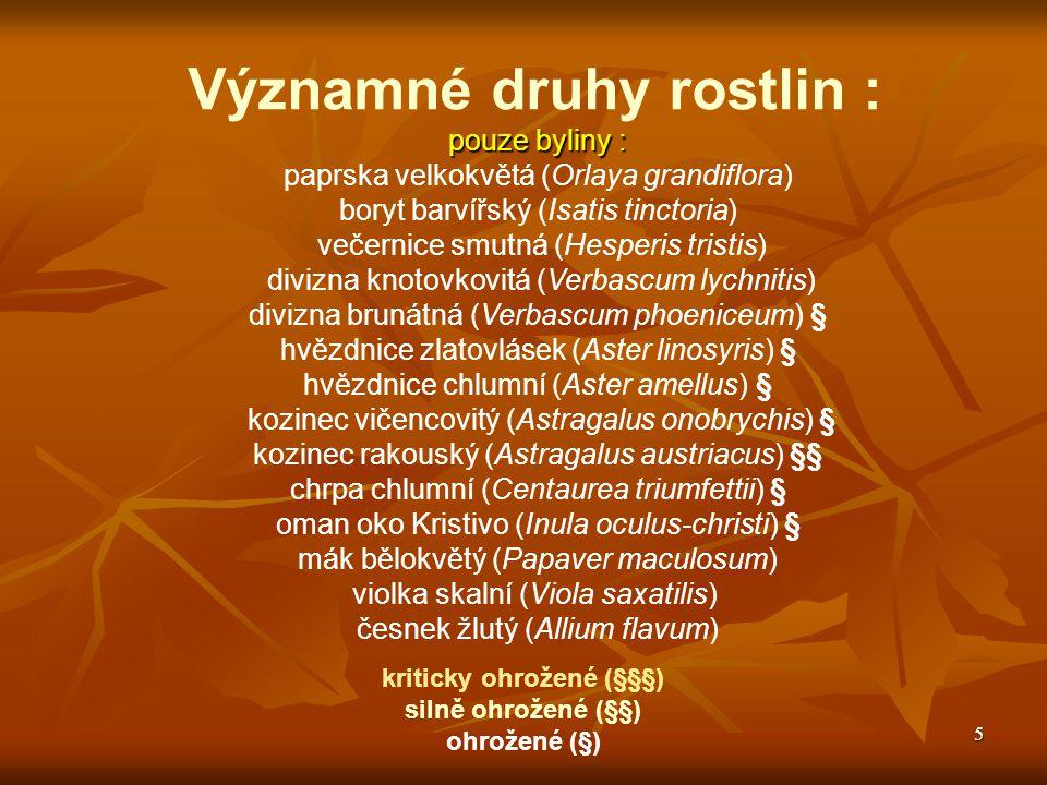 5 Významné druhy rostlin : pouze byliny : paprska velkokvětá (Orlaya grandiflora) boryt barvířský (Isatis tinctoria) večernice smutná (Hesperis tristi