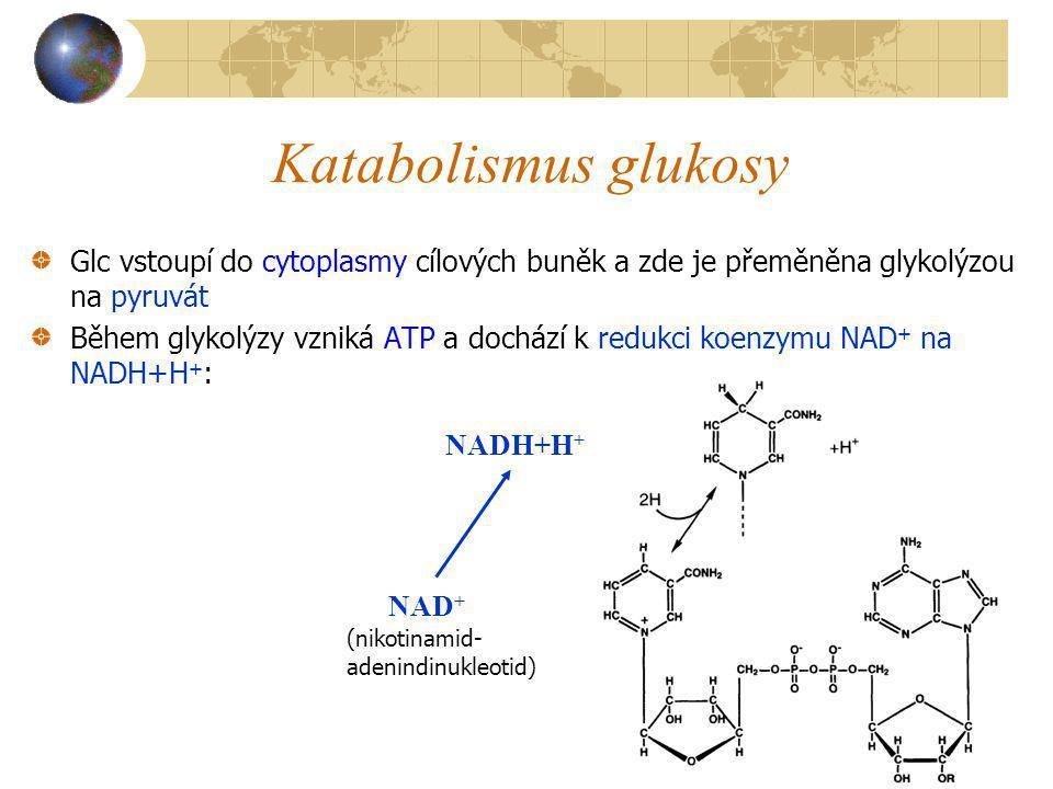 Katabolismus glukosy Glc vstoupí do cytoplasmy cílových buněk a zde je přeměněna glykolýzou na pyruvát Během glykolýzy vzniká ATP a dochází k redukci
