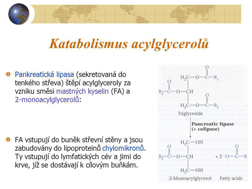 Katabolismus acylglycerolů Pankreatická lipasa (sekretovaná do tenkého střeva) štěpí acylglyceroly za vzniku směsi mastných kyselin (FA) a 2-monoacylg