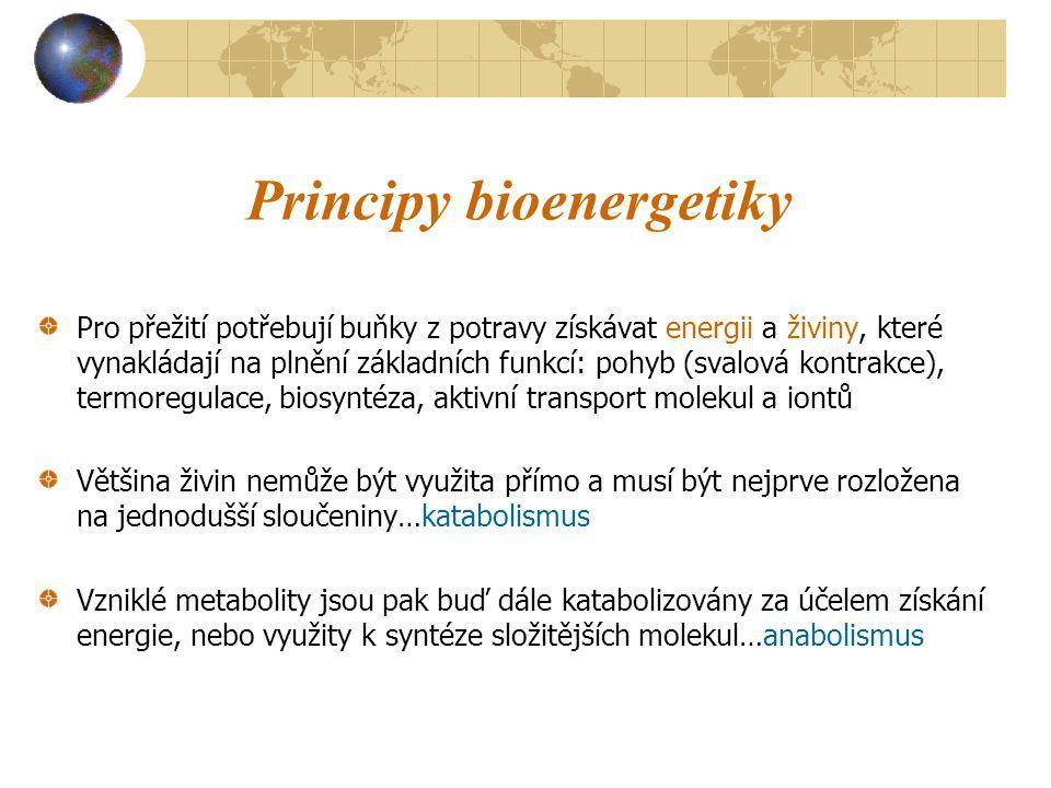 Principy bioenergetiky Pro přežití potřebují buňky z potravy získávat energii a živiny, které vynakládají na plnění základních funkcí: pohyb (svalová