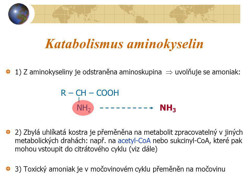 Katabolismus aminokyselin 1) Z aminokyseliny je odstraněna aminoskupina  uvolňuje se amoniak: 2) Zbylá uhlíkatá kostra je přeměněna na metabolit zpra