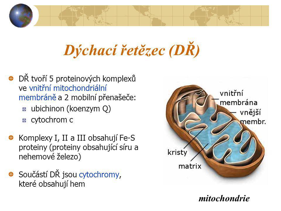 Dýchací řetězec (DŘ) DŘ tvoří 5 proteinových komplexů ve vnitřní mitochondriální membráně a 2 mobilní přenašeče: ubichinon (koenzym Q) cytochrom c Kom