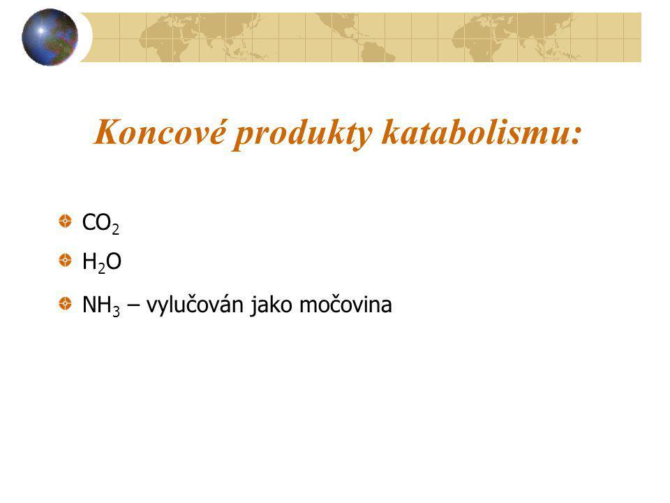 Koncové produkty katabolismu: CO 2 H 2 O NH 3 – vylučován jako močovina