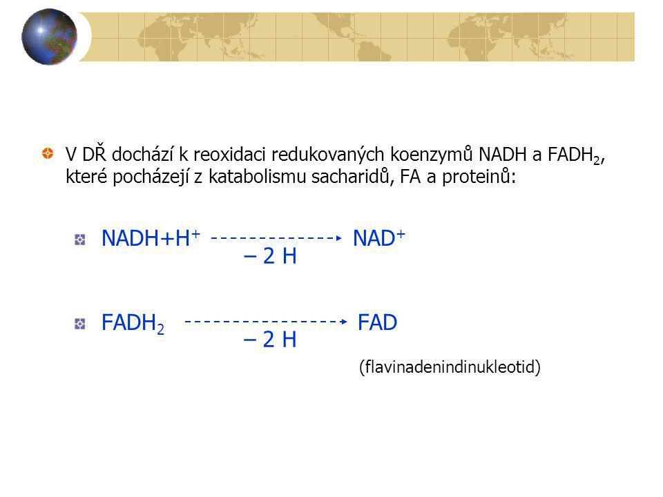 V DŘ dochází k reoxidaci redukovaných koenzymů NADH a FADH 2, které pocházejí z katabolismu sacharidů, FA a proteinů: NADH+H + NAD + FADH 2 FAD – 2 H