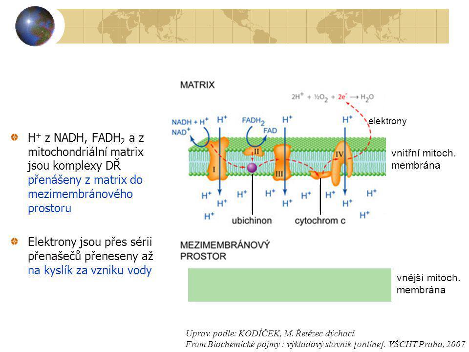 H + z NADH, FADH 2 a z mitochondriální matrix jsou komplexy DŘ přenášeny z matrix do mezimembránového prostoru Elektrony jsou přes sérii přenašečů pře