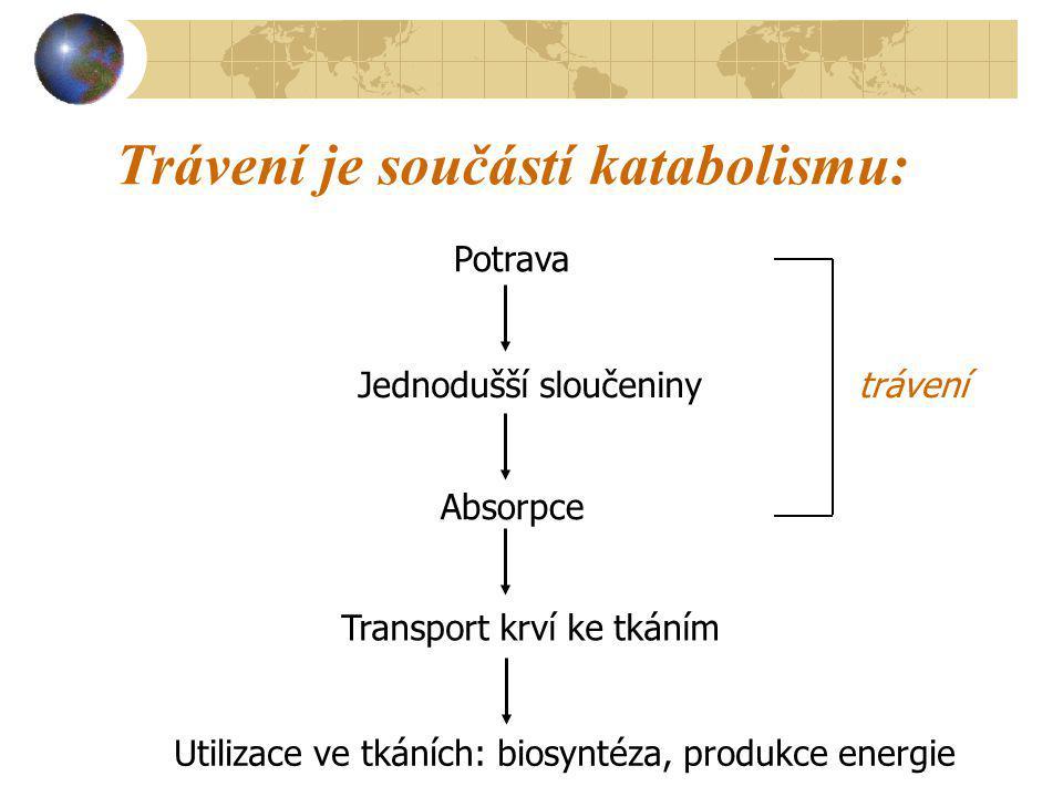 Trávení je součástí katabolismu: Potrava Jednodušší sloučeniny Absorpce Transport krví ke tkáním Utilizace ve tkáních: biosyntéza, produkce energie tr
