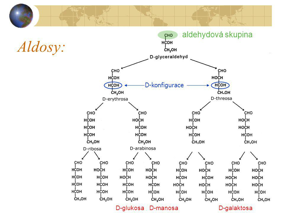 Aldosy: aldehydová skupina D-glukosa D-manosa D-galaktosa D-konfigurace