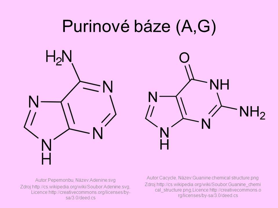 Pyrimidinové báze (U,T,C) Autor:Cacycle, Název:Uracil chemical structure.png Zdroj:http://cs.wikipedia.org/wiki/Soubor:Uracil_chemical _structure.png Autor:Cacycle, Název:Thymine chemical structure.png Zdroj:http://cs.wikipedia.org/wiki/Soubor:Thymine_chemical_structur e.png Autor:Cacycle, Název:Cytosine chemical structure.png Zdroj:http://cs.wikipedia.org/wiki/Soubor:Cytosine_chemical_structur e.png