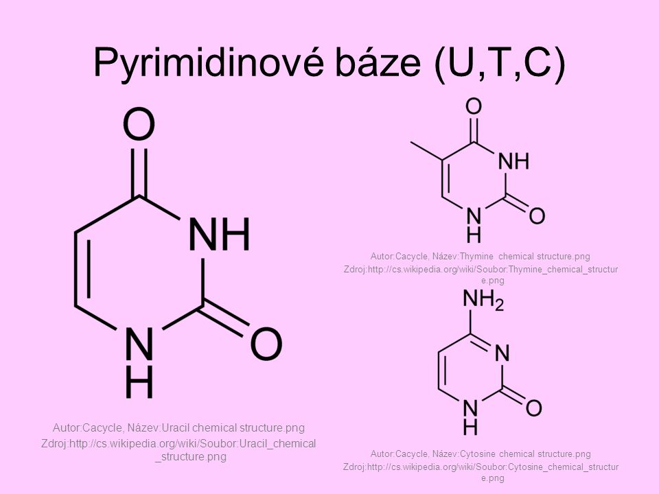 Pyrimidinové báze (U,T,C) Autor:Cacycle, Název:Uracil chemical structure.png Zdroj:http://cs.wikipedia.org/wiki/Soubor:Uracil_chemical _structure.png