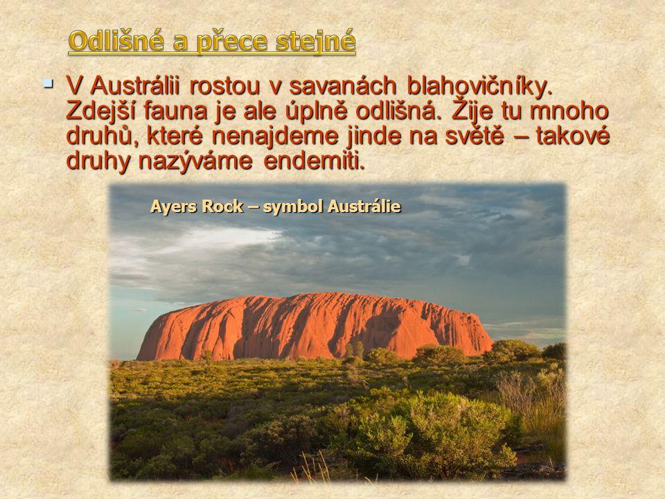  V Austrálii rostou v savanách blahovičníky. Zdejší fauna je ale úplně odlišná. Žije tu mnoho druhů, které nenajdeme jinde na světě – takové druhy na