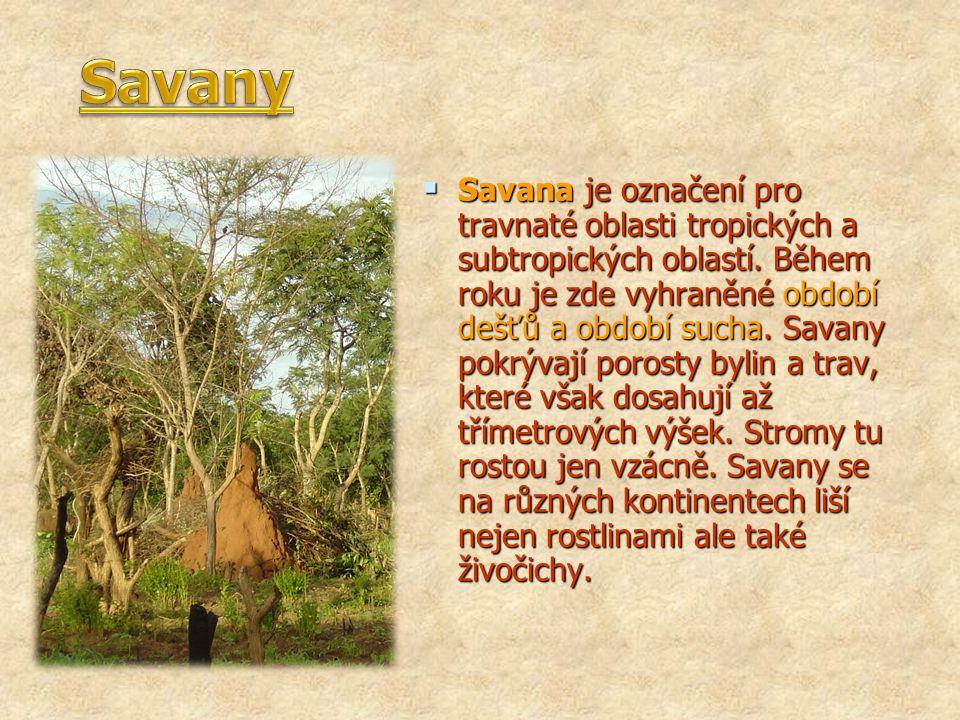  Savana je označení pro travnaté oblasti tropických a subtropických oblastí. Během roku je zde vyhraněné období dešťů a období sucha. Savany pokrývaj