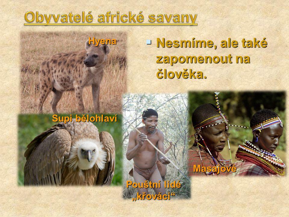""" Nesmíme, ale také zapomenout na člověka. Hyena Supi bělohlaví Pouštní lidé """"křováci"""" Masajové"""