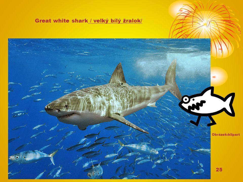 25 Great white shark / velký bílý žralok/ Obrázek:klipart