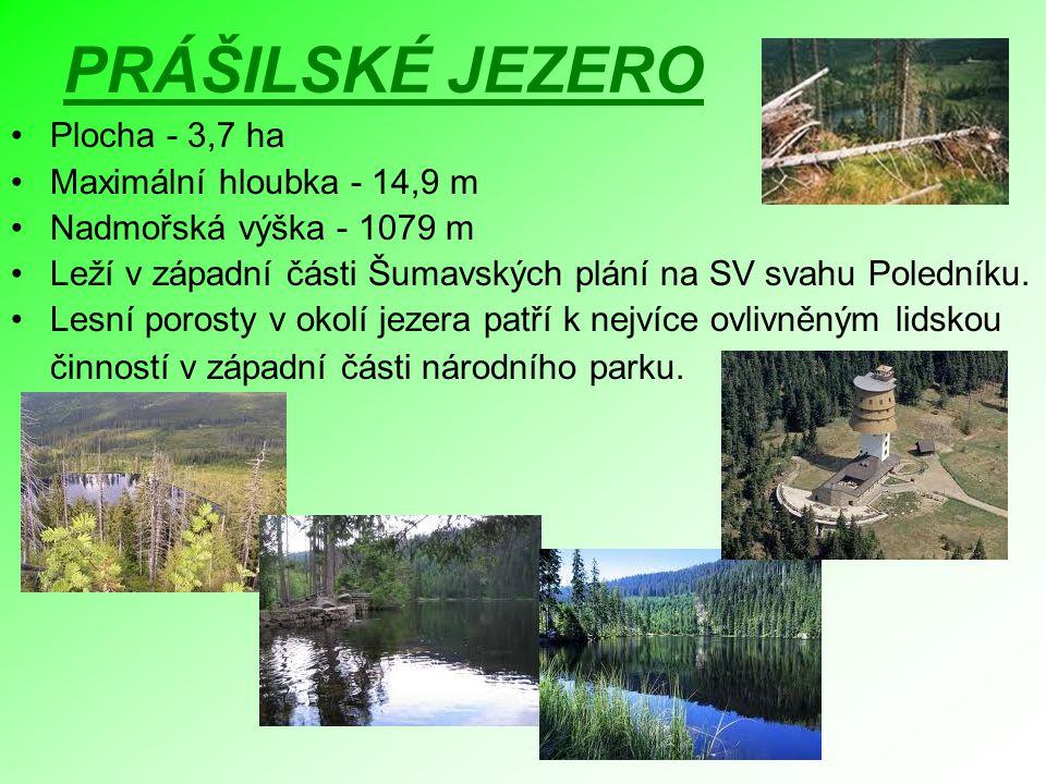 PRÁŠILSKÉ JEZERO Plocha - 3,7 ha Maximální hloubka - 14,9 m Nadmořská výška - 1079 m Leží v západní části Šumavských plání na SV svahu Poledníku. Lesn