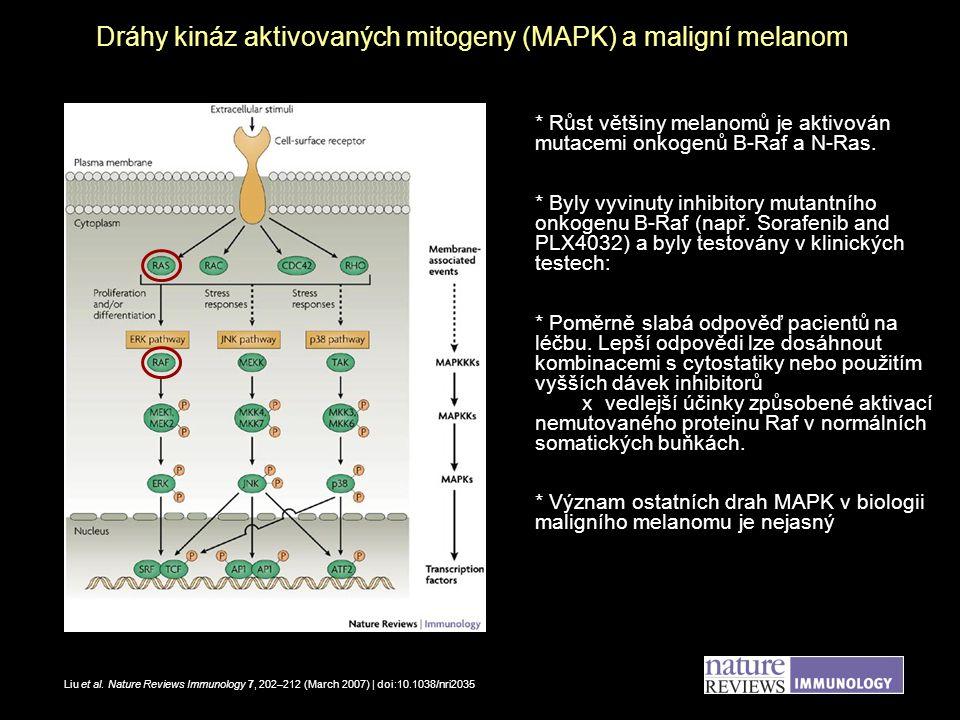 Srovnání růstu buněk maligního melanomu v přítomnosti inhibitorů různých drah MAPK A375 G-361 U = inhibitor dráhy Erk U0126 SB = inhibitor dráhy p38 SB202190