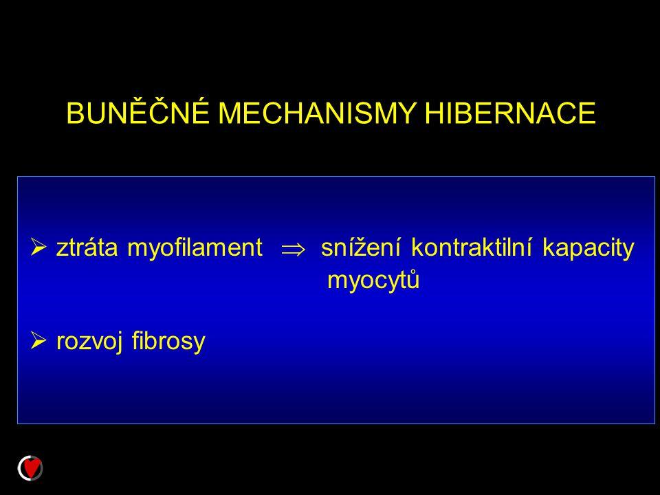 BUNĚČNÉ MECHANISMY HIBERNACE  ztráta myofilament  snížení kontraktilní kapacity myocytů  rozvoj fibrosy