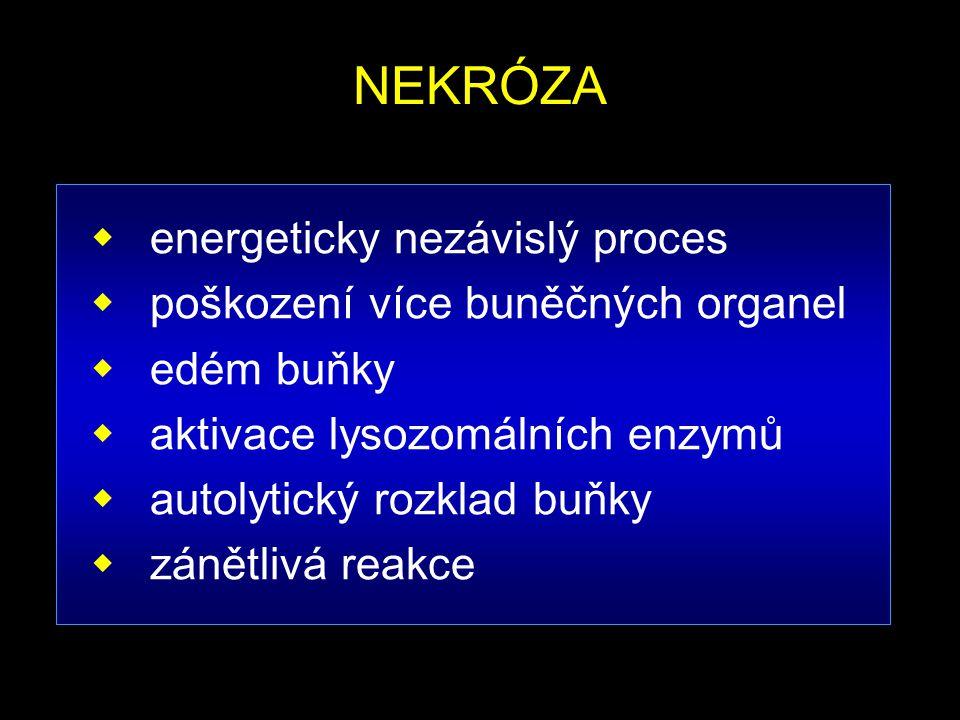 NEKRÓZA  energeticky nezávislý proces  poškození více buněčných organel  edém buňky  aktivace lysozomálních enzymů  autolytický rozklad buňky  z