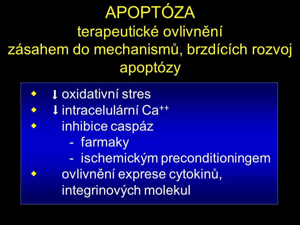 APOPTÓZA terapeutické ovlivnění zásahem do mechanismů, brzdících rozvoj apoptózy  oxidativní stres  intracelulární Ca ++  inhibice caspáz - farmaky