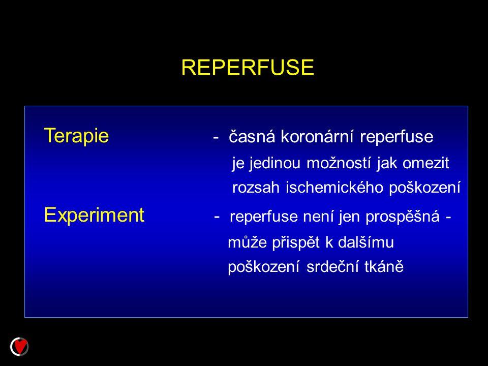 REPERFUSE Terapie - časná koronární reperfuse je jedinou možností jak omezit rozsah ischemického poškození Experiment - reperfuse není jen prospěšná -