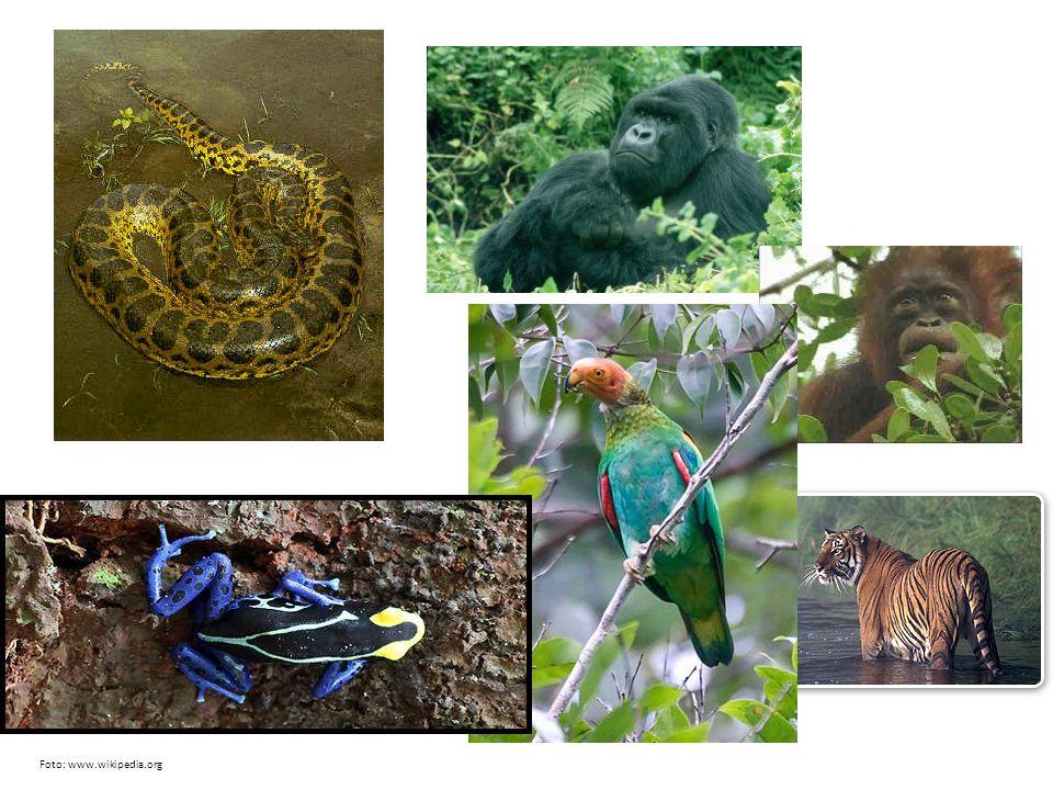 Rostliny: orchidej, liány, kaučukovník, banánovník… http://upload.wikimedia.org/wikipedia/commons/b/bc/Rainforest_Fatu_Hiva.jpg