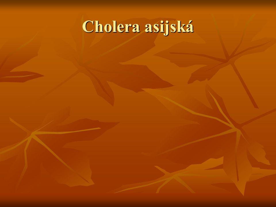Cholera asijská