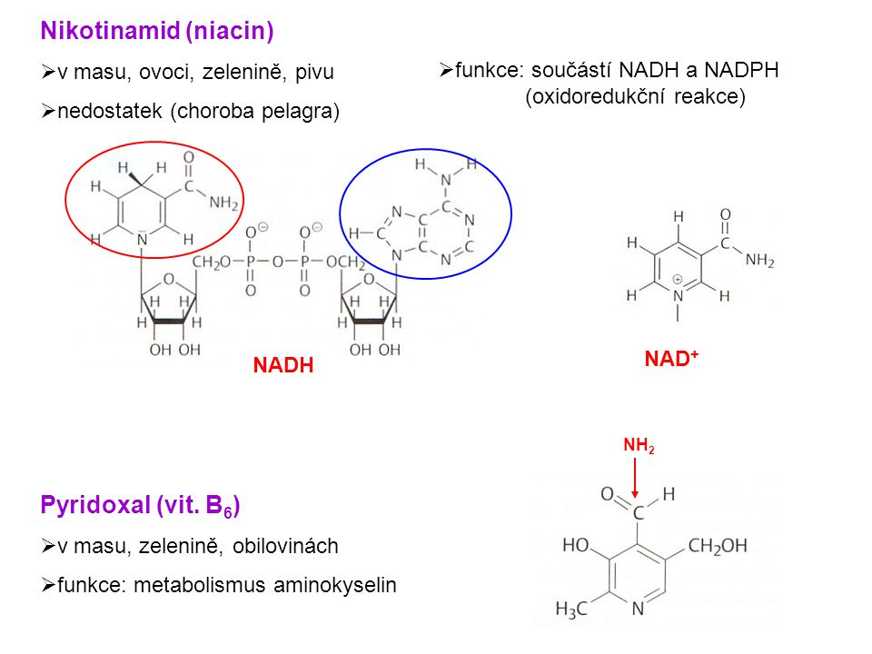 Pyrimidinové báze  součást nukleových kyselin UracilThymin Cytosin (RNA)(DNA) (RNA i DNA)