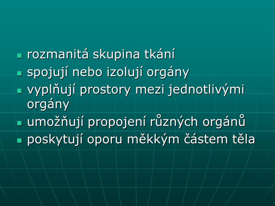rozmanitá skupina tkání rozmanitá skupina tkání spojují nebo izolují orgány spojují nebo izolují orgány vyplňují prostory mezi jednotlivými orgány vyp