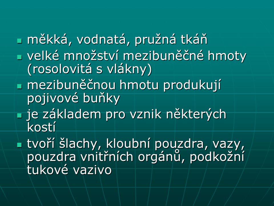 měkká, vodnatá, pružná tkáň měkká, vodnatá, pružná tkáň velké množství mezibuněčné hmoty (rosolovitá s vlákny) velké množství mezibuněčné hmoty (rosol