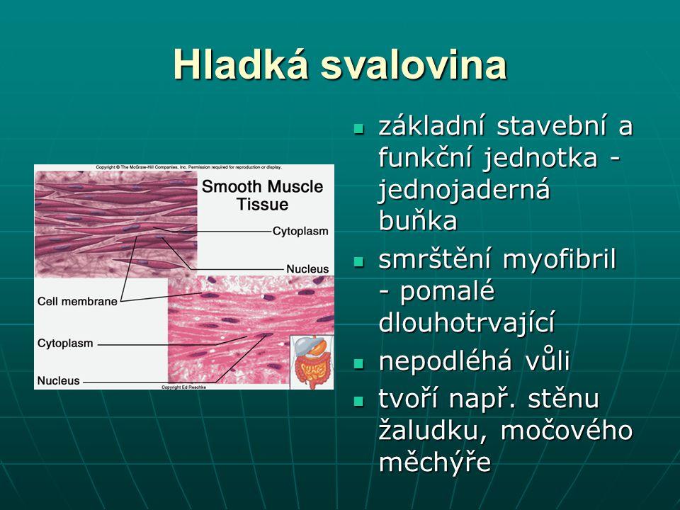 Hladká svalovina základní stavební a funkční jednotka - jednojaderná buňka základní stavební a funkční jednotka - jednojaderná buňka smrštění myofibri