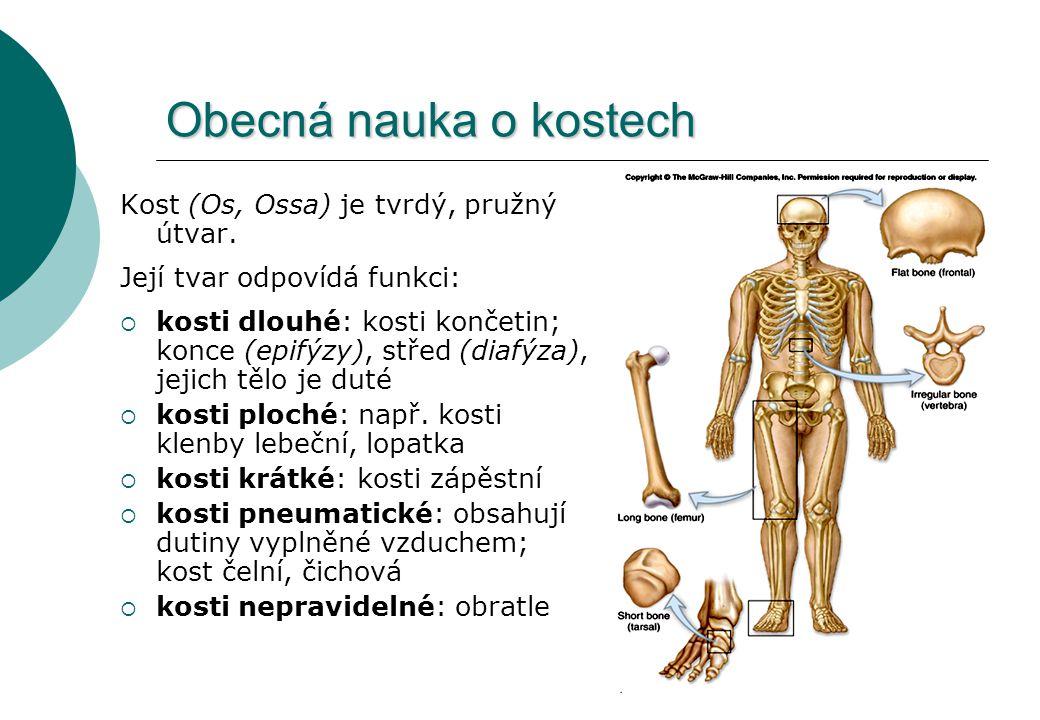 Obecná nauka o kostech Kost (Os, Ossa) je tvrdý, pružný útvar. Její tvar odpovídá funkci:  kosti dlouhé: kosti končetin; konce (epifýzy), střed (diaf