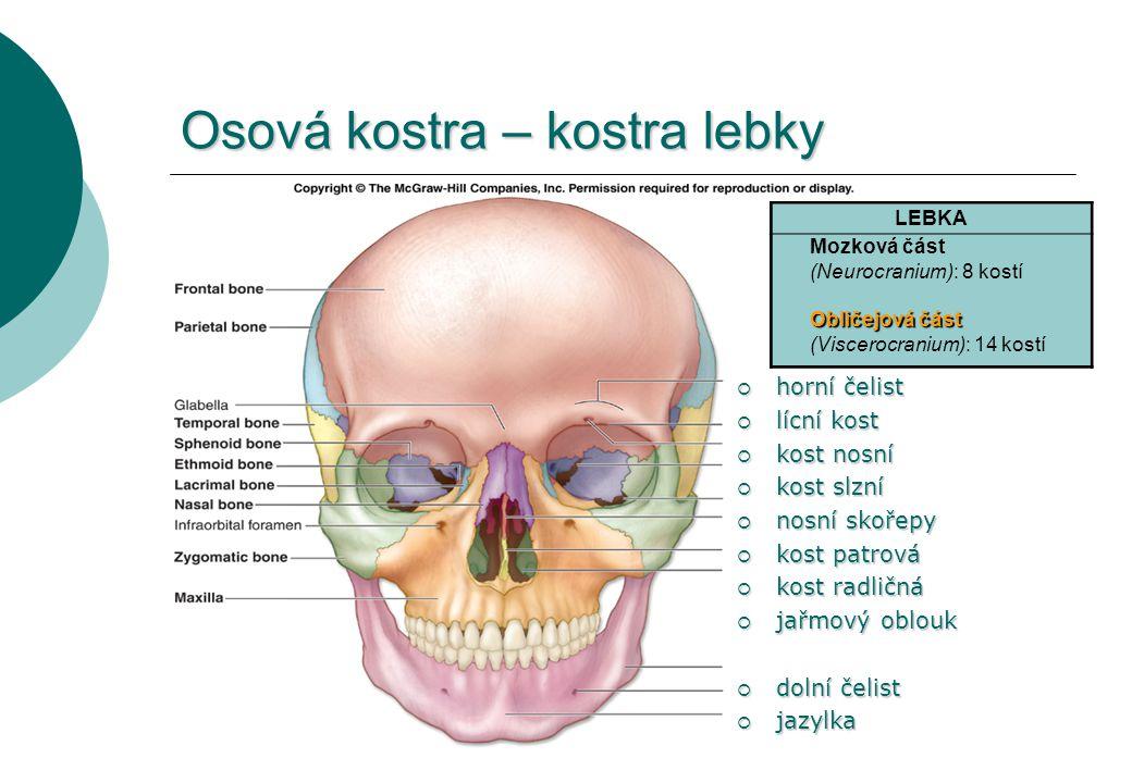 Osová kostra – kostra lebky  horní čelist  lícní kost  kost nosní  kost slzní  nosní skořepy  kost patrová  kost radličná  jařmový oblouk  do