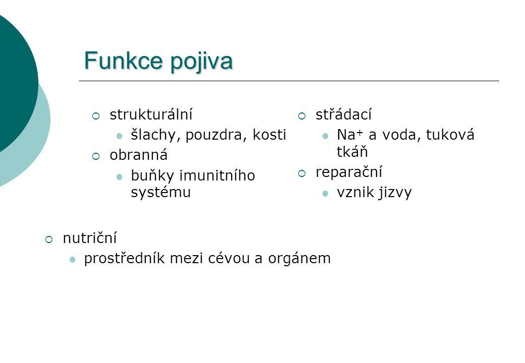 Funkce pojiva  strukturální šlachy, pouzdra, kosti  obranná buňky imunitního systému  střádací Na + a voda, tuková tkáň  reparační vznik jizvy  n