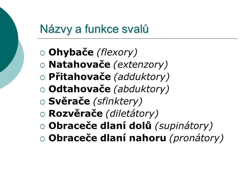 Názvy a funkce svalů  Ohybače (flexory)  Natahovače (extenzory)  Přitahovače (adduktory)  Odtahovače (abduktory)  Svěrače (sfinktery)  Rozvěrače