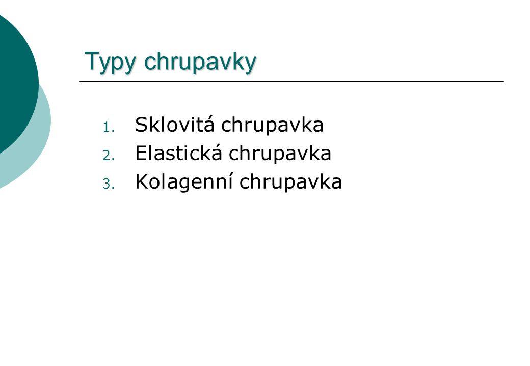 Typy chrupavky 1. Sklovitá chrupavka 2. Elastická chrupavka 3. Kolagenní chrupavka