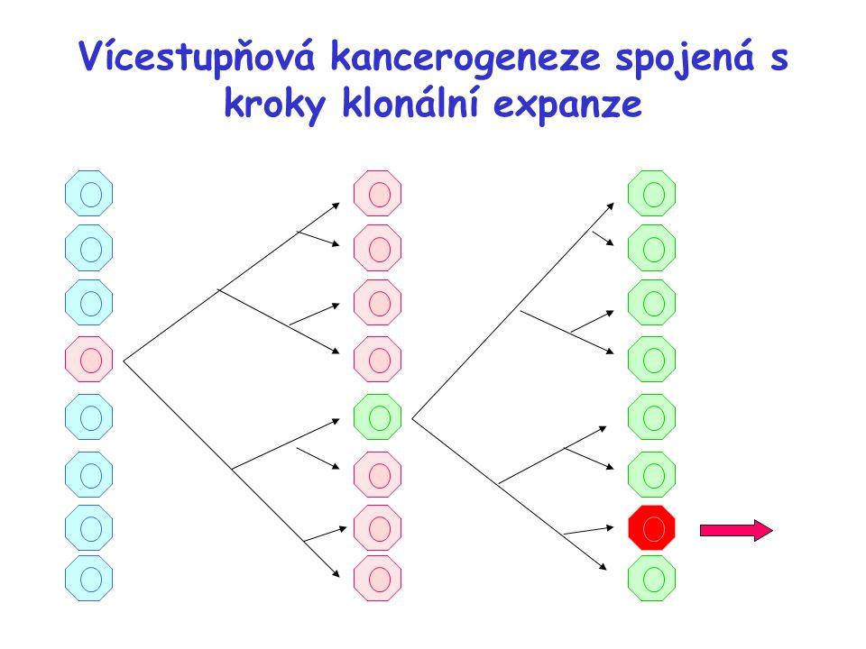 Vícestupňová kancerogeneze spojená s kroky klonální expanze