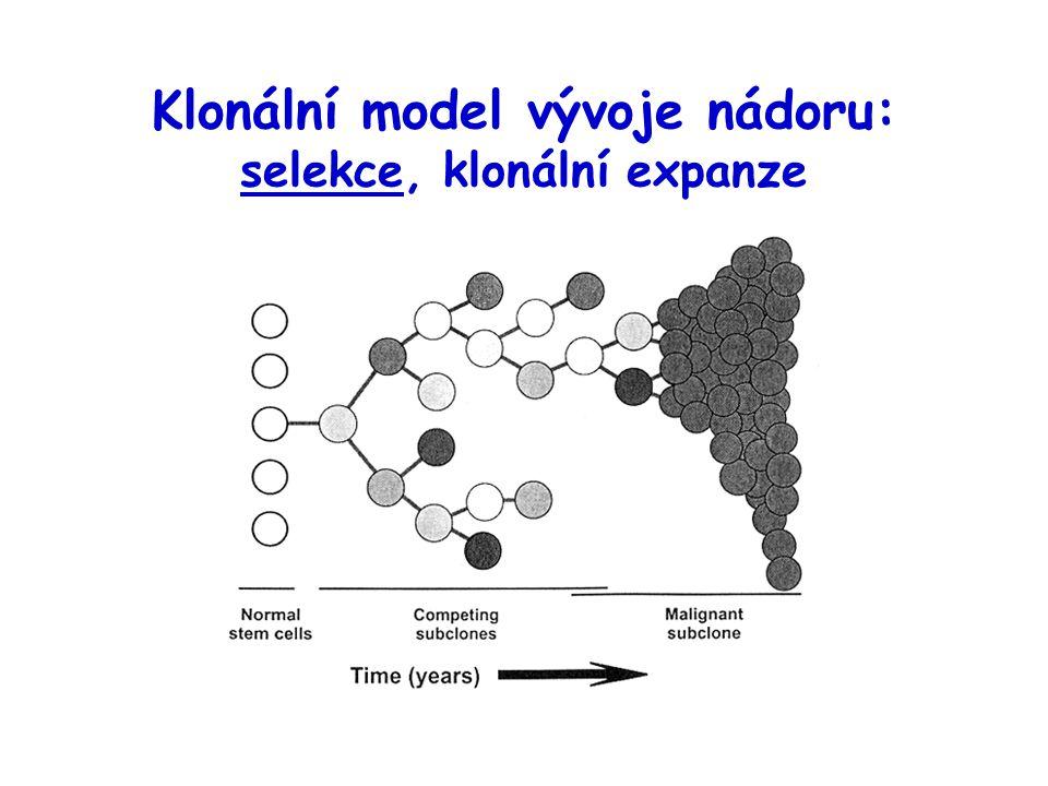 Klonální model vývoje nádoru: selekce, klonální expanze
