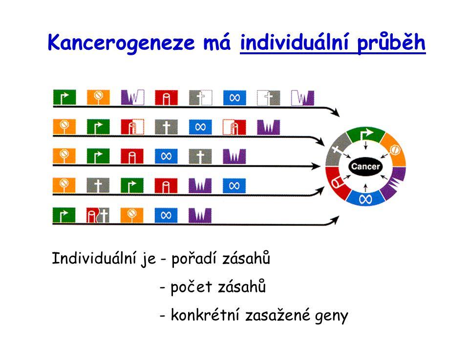 Kancerogeneze má individuální průběh Individuální je - pořadí zásahů - počet zásahů - konkrétní zasažené geny