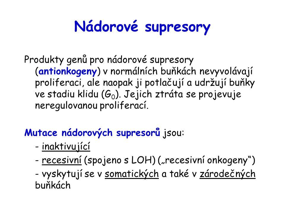 Nádorové supresory Produkty genů pro nádorové supresory (antionkogeny) v normálních buňkách nevyvolávají proliferaci, ale naopak ji potlačují a udržuj