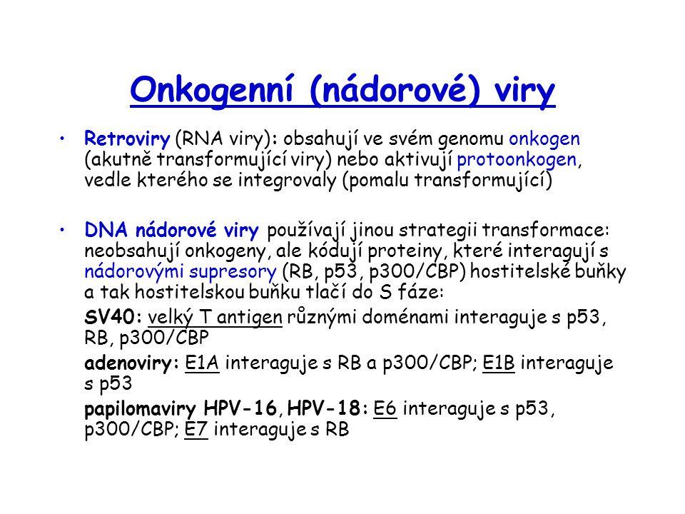 Onkogenní (nádorové) viry Retroviry (RNA viry): obsahují ve svém genomu onkogen (akutně transformující viry) nebo aktivují protoonkogen, vedle kterého