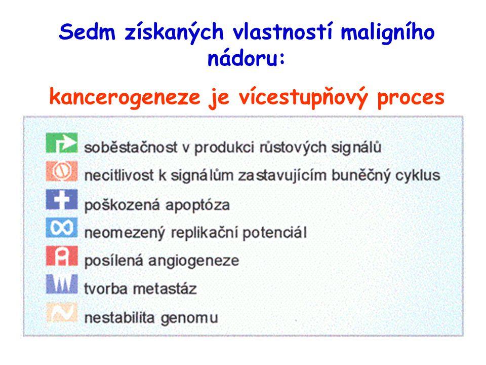 Sedm získaných vlastností maligního nádoru: kancerogeneze je vícestupňový proces