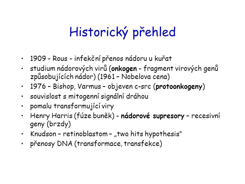 Onkogenní (nádorové) viry Retroviry (RNA viry): obsahují ve svém genomu onkogen (akutně transformující viry) nebo aktivují protoonkogen, vedle kterého se integrovaly (pomalu transformující) DNA nádorové viry používají jinou strategii transformace: neobsahují onkogeny, ale kódují proteiny, které interagují s nádorovými supresory (RB, p53, p300/CBP) hostitelské buňky a tak hostitelskou buňku tlačí do S fáze: SV40: velký T antigen různými doménami interaguje s p53, RB, p300/CBP adenoviry: E1A interaguje s RB a p300/CBP; E1B interaguje s p53 papilomaviry HPV-16, HPV-18: E6 interaguje s p53, p300/CBP; E7 interaguje s RB