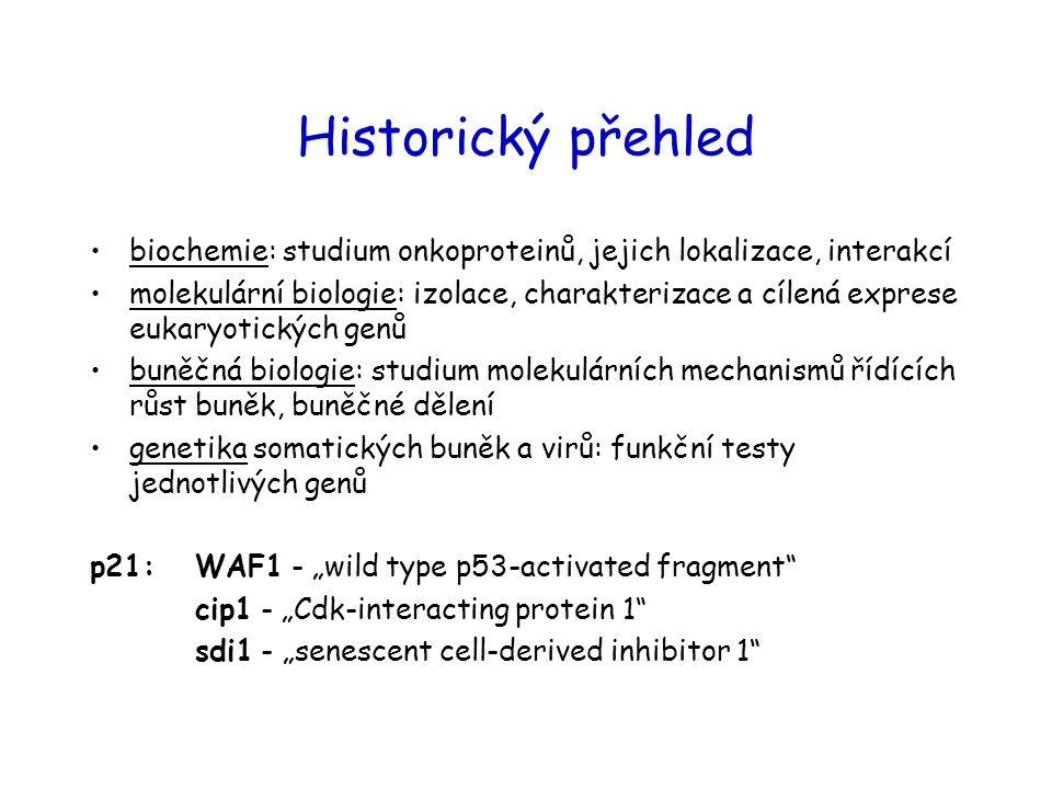 Historický přehled biochemie: studium onkoproteinů, jejich lokalizace, interakcí molekulární biologie: izolace, charakterizace a cílená exprese eukary