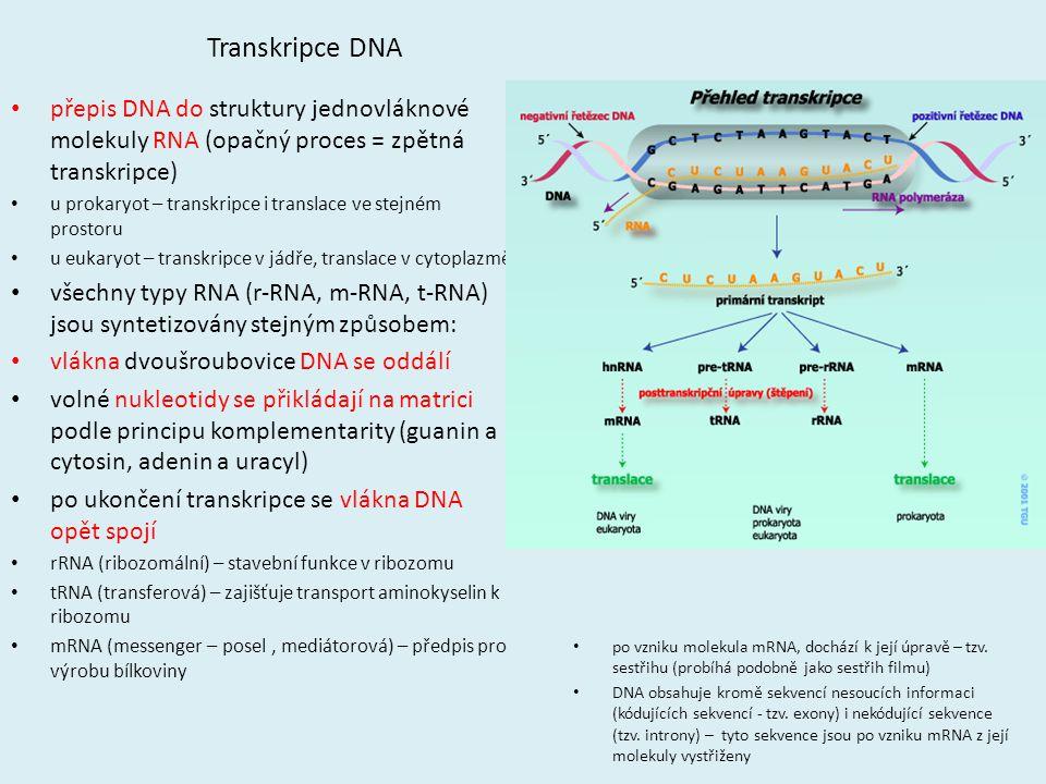 Transkripce DNA přepis DNA do struktury jednovláknové molekuly RNA (opačný proces = zpětná transkripce) u prokaryot – transkripce i translace ve stejn