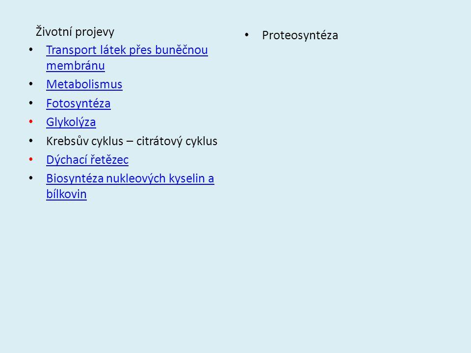 Životní projevy Transport látek přes buněčnou membránu Transport látek přes buněčnou membránu Metabolismus Fotosyntéza Glykolýza Krebsův cyklus – citr