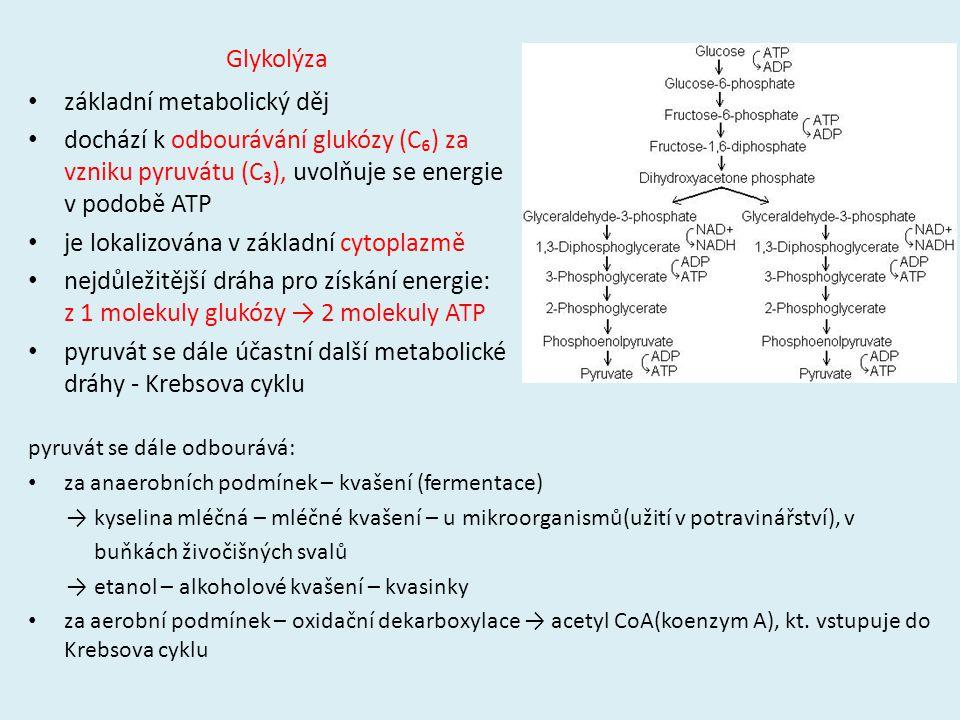 Glykolýza základní metabolický děj dochází k odbourávání glukózy (C₆) za vzniku pyruvátu (C₃), uvolňuje se energie v podobě ATP je lokalizována v zákl