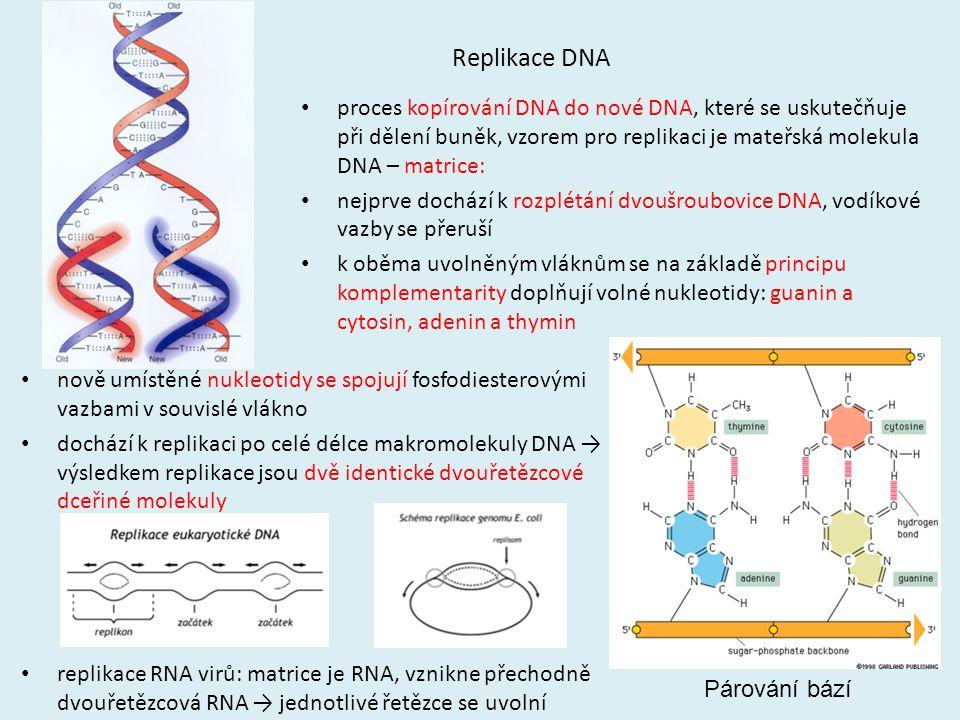 Replikace DNA proces kopírování DNA do nové DNA, které se uskutečňuje při dělení buněk, vzorem pro replikaci je mateřská molekula DNA – matrice: nejpr