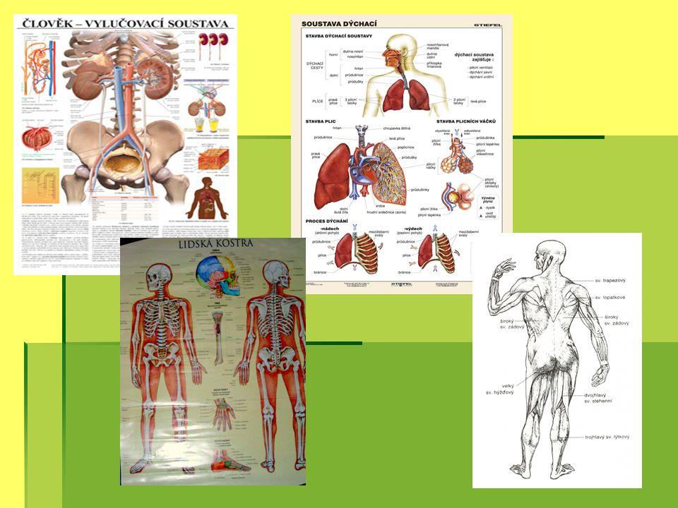 Konečně čtvrtý ročník…  Zde se dokončuje výuka o stavbě lidského těla a na ní navazuje učivo genetiky a později i ekologie.